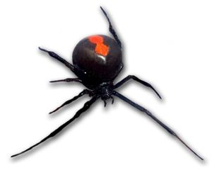 Redback_frontal_view_2